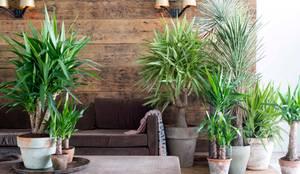 industrial Living room by Pflanzenfreude.de