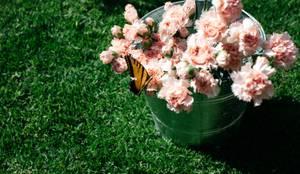 Hogar de estilo  por Bunch of Flowers