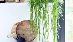 Hängende Garten-Elemente verzieren Bretter und Schrankecken – Pflanzenfreude.de:  Raumbegrünung von Pflanzenfreude.de