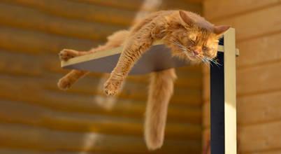 stylecats®