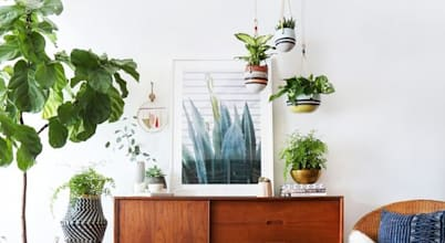 Plantas de interiores para decorar tu casa esta primavera