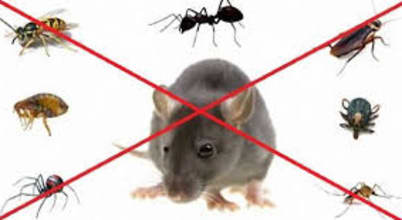 شركة تنظيف ومكافحة حشرات ونقل عفش شمال الرياض0507719298