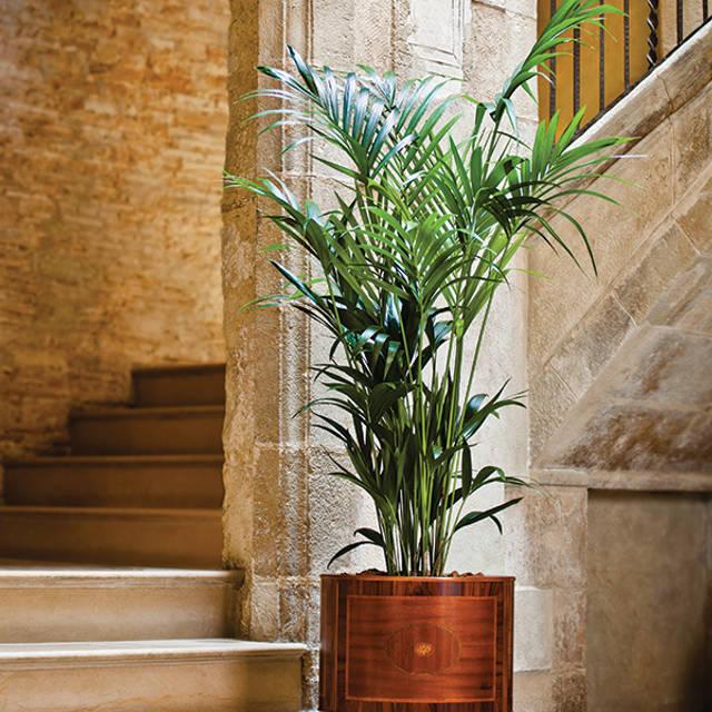 Descubre el atractivo natural de ARECA PALM: Hogar de estilo de Hobby Flower