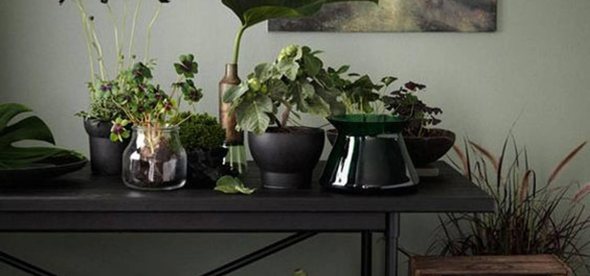 urban jungle style par minoop homify. Black Bedroom Furniture Sets. Home Design Ideas