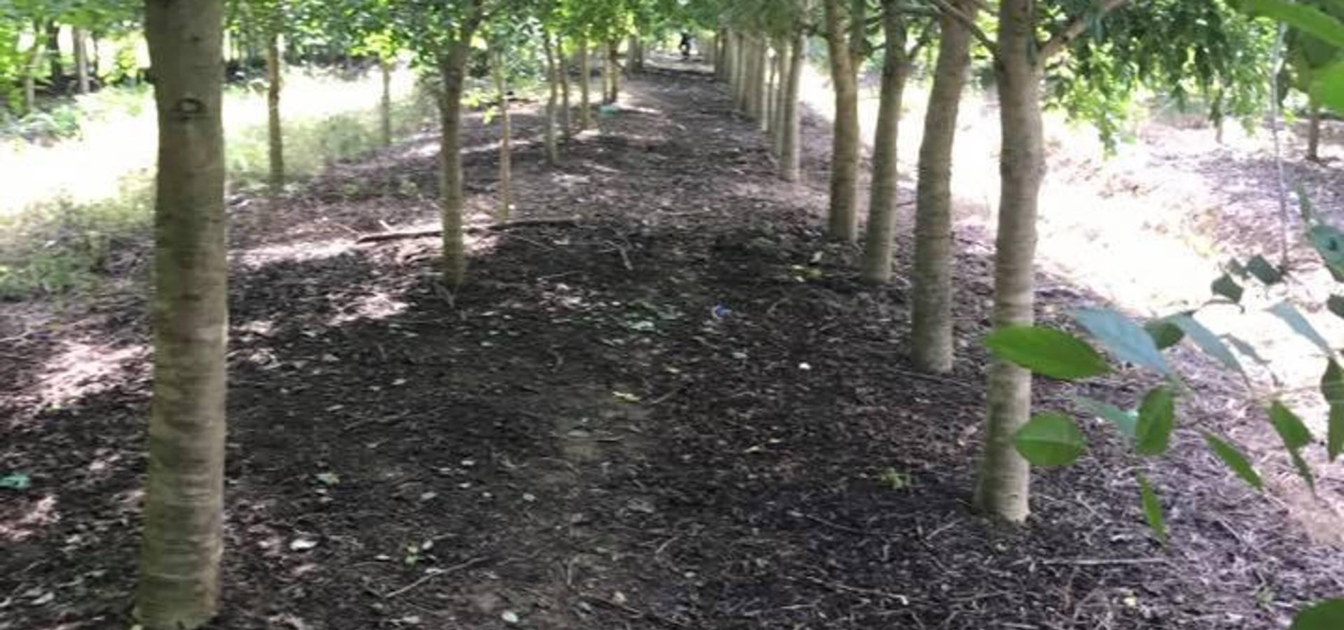 Kz_รับจัดสวน จำหน่ายต้นไม้ใหญ่ ต้นไม้เล็ก ทุกชนิด – สวนลุงลุย