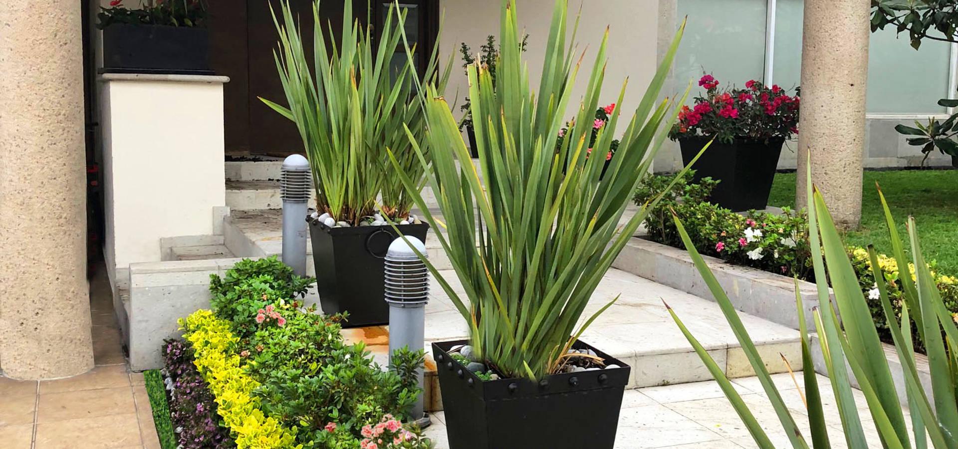 Cattleya jardinería