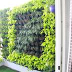 Interioforest Plantscaping Solutions (OPC) Pvt. Ltd