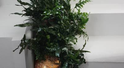Tiziano Codiferro -  Master Gardener