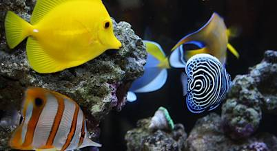 AquariumGroup