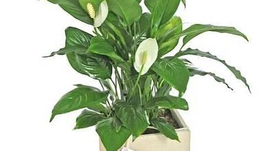 Flores & Regalos Tu jardin