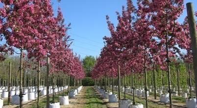 Barcham Trees Plc