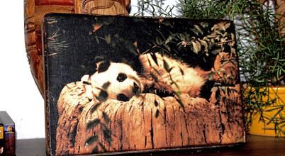 Waldbär Holzdesign