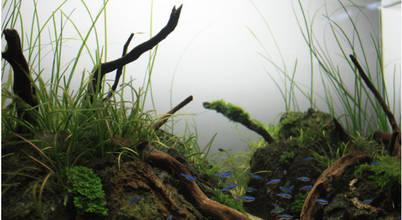 DendroAcua - Proyectos Naturales a medida