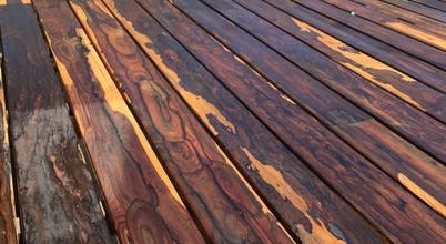 woodlosophy