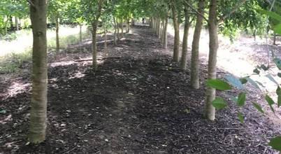 Kz_รับจัดสวน จำหน่ายต้นไม้ใหญ่ ต้นไม้เล็ก ทุกชนิด - สวนลุงลุย