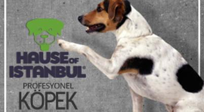 Köpek Eğitimi İstanbul