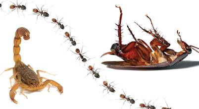 Pest Managers Cape Town - Pest Control