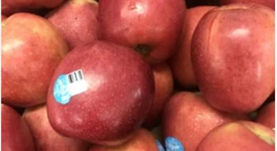 HC Fruits