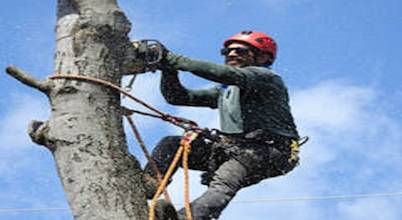 Tree Service of Charlottesville