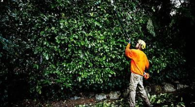 Mcallen Tree Service