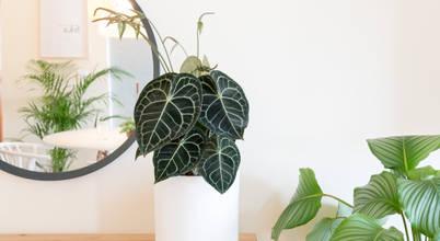 Urban Jungle - Plantas e Projectos