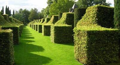 Essex Garden Care