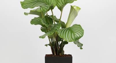 Bioma Plants