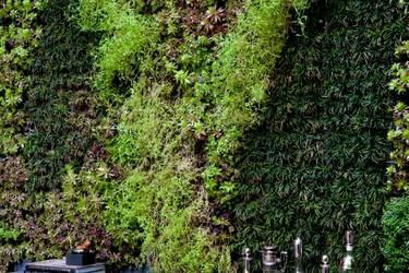 Lotus peyzaj art culos de jardiner a en istanbul homify for Articulos para jardineria