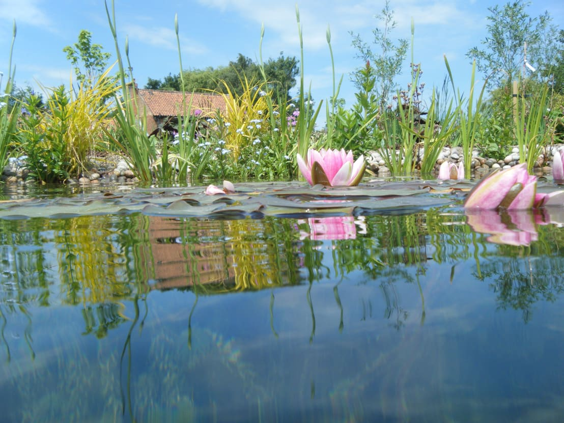 How to build your own diy garden pond for Build your own garden pond