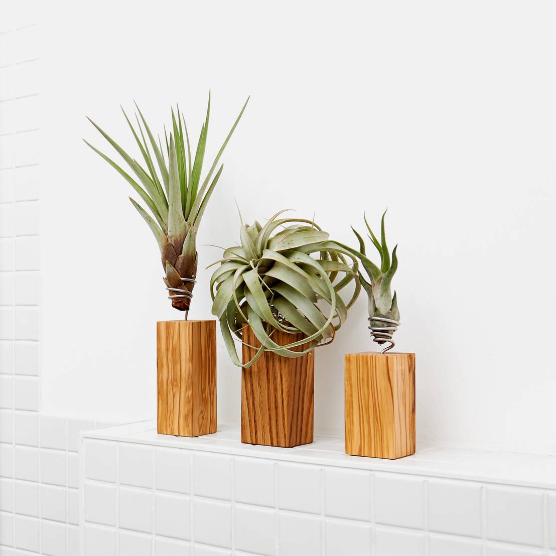 lebendiges design mit luftpflanzen von evrgreen vertriebs