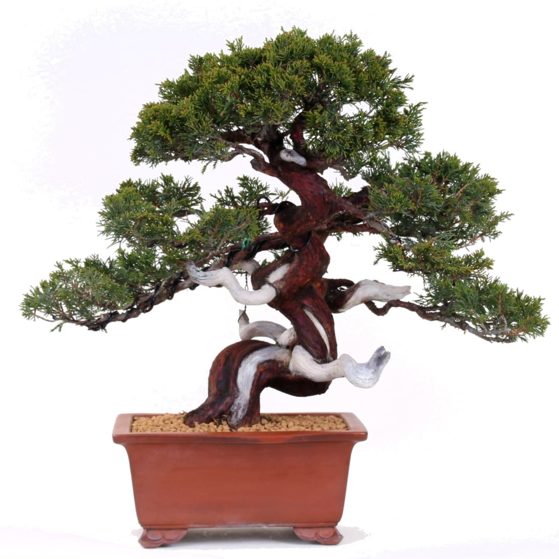 bonsai nadelb ume von bonsai shopping homify. Black Bedroom Furniture Sets. Home Design Ideas