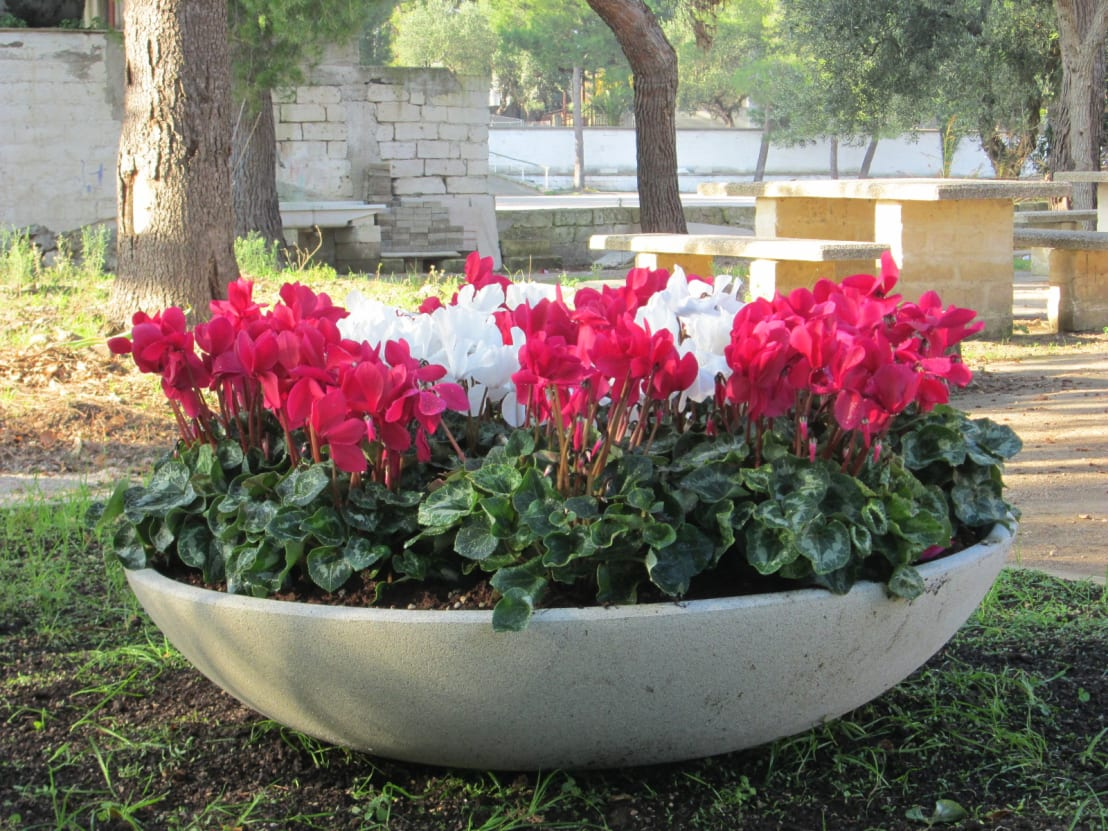 Ciotole da giardino di p m c srl homify for Fiori per esterno
