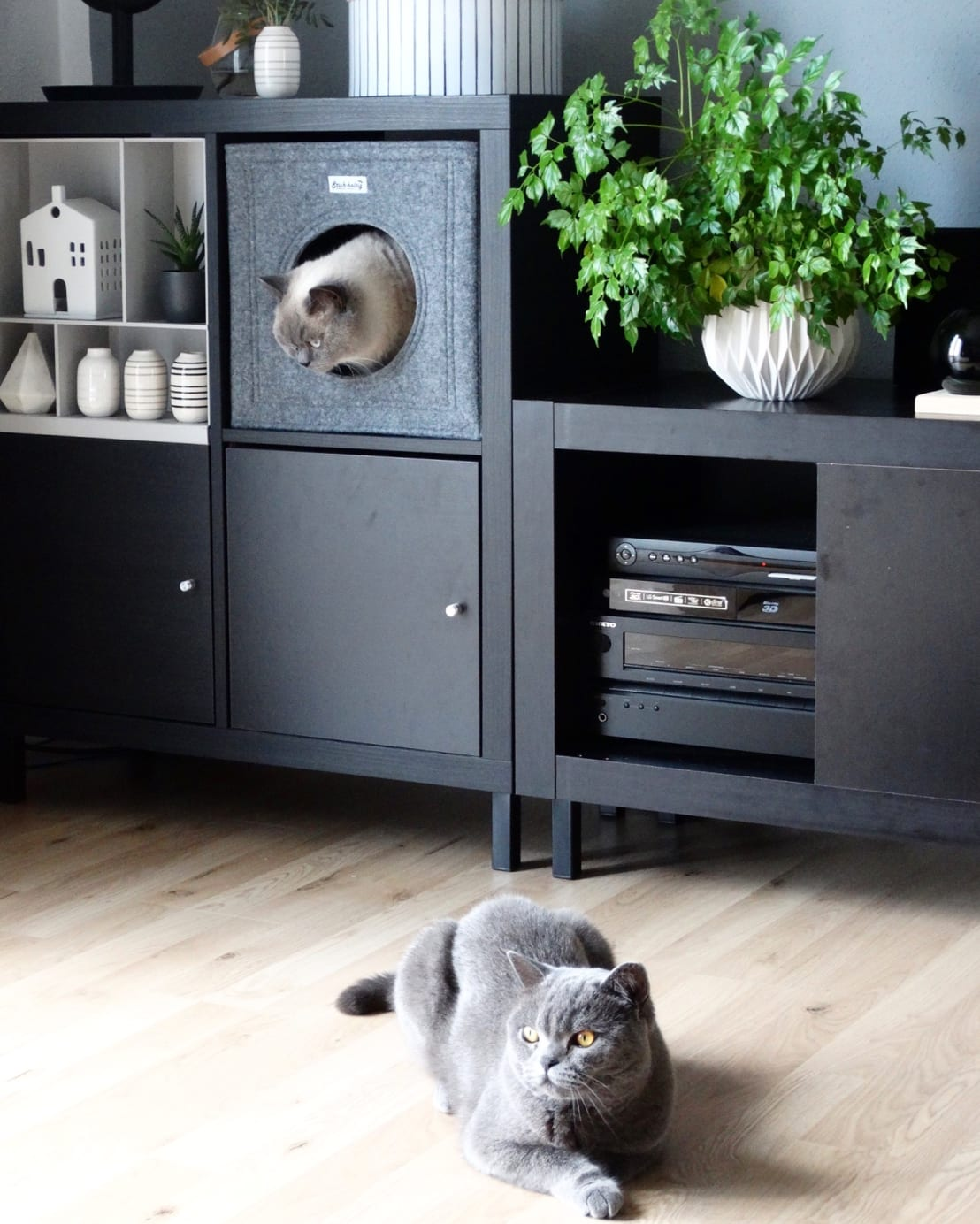 ikea hack regal kallax wir zum katzenm bel verwandelt von die moderne katze homify. Black Bedroom Furniture Sets. Home Design Ideas