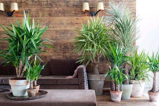 9 Perfekte Pflanzen Für Das Schlafzimmer