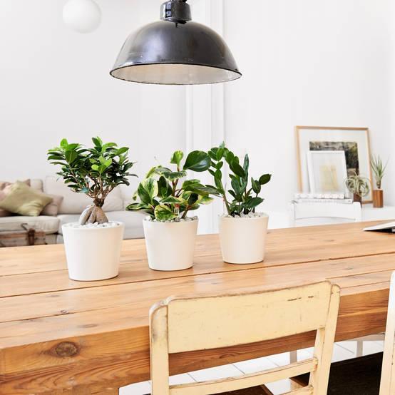 9 zimmerpflanzen die euch durchatmen lassen for Zimmerpflanzen dekorativ