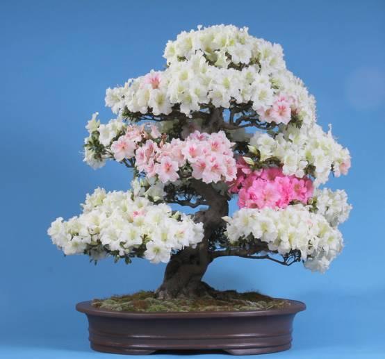 Como plantar e cuidar de bonsais em casa for Como cultivar bonsais
