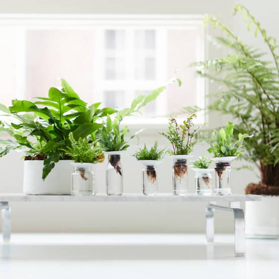 Trồng cây trong nhà: 15 gợi ý chọn cây mang đến tài lộc, thẩm mỹ