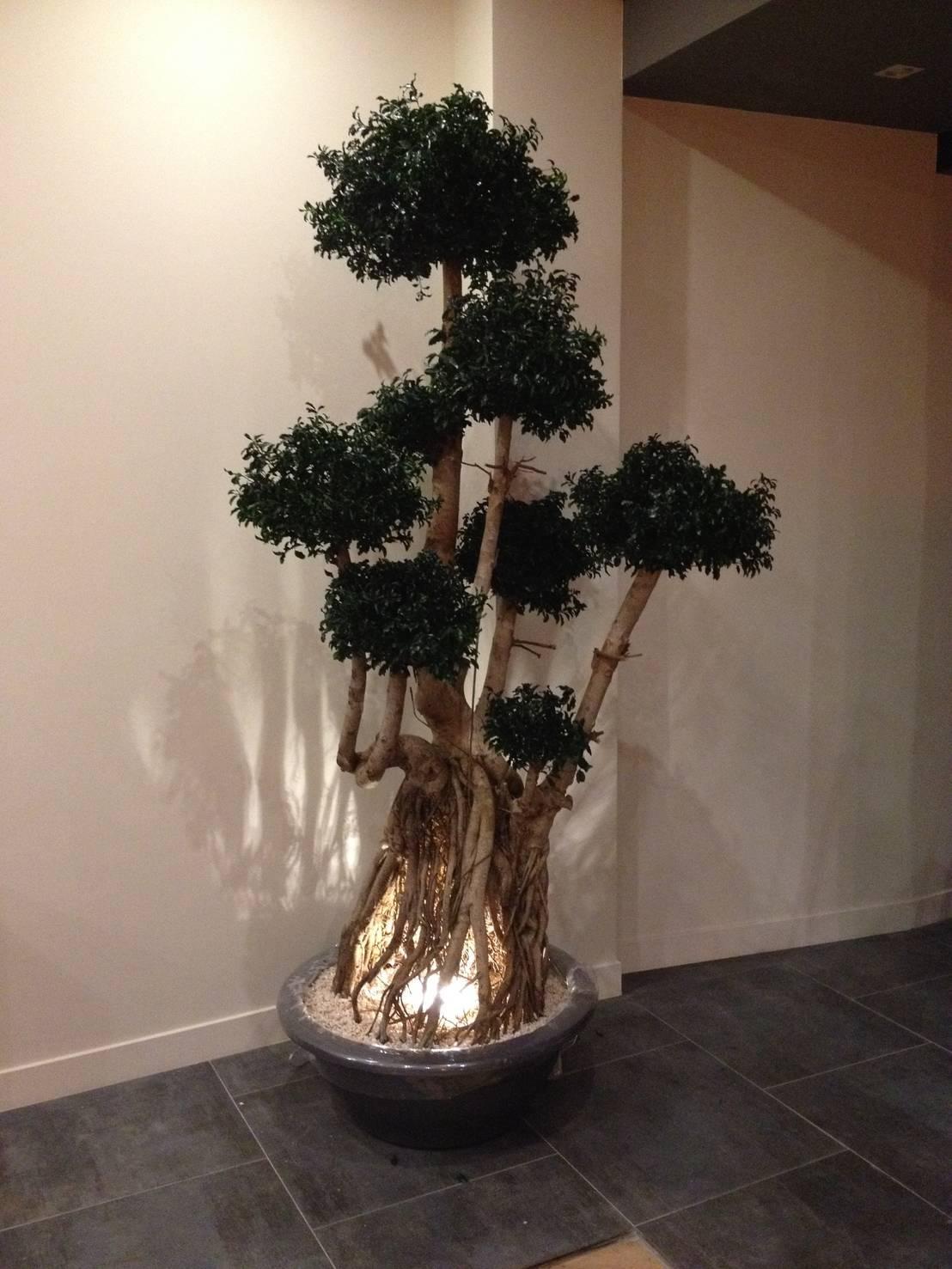 Plantas de interior para una casa sin luz natural for Plantas de interior con poca luz