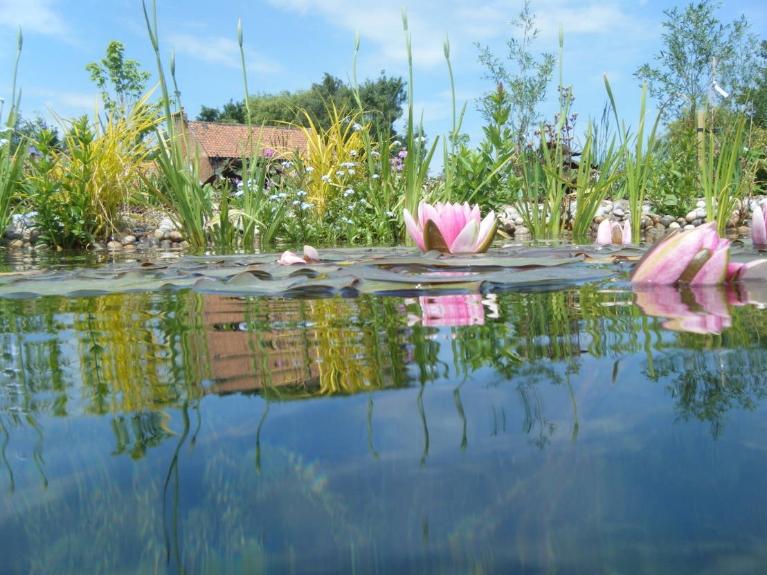 How to build your own garden pond for Garden pool book