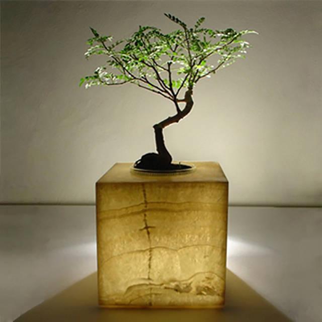 I semplici steps per comprare e coltivare un bonsai - Cura dei bonsai in casa ...