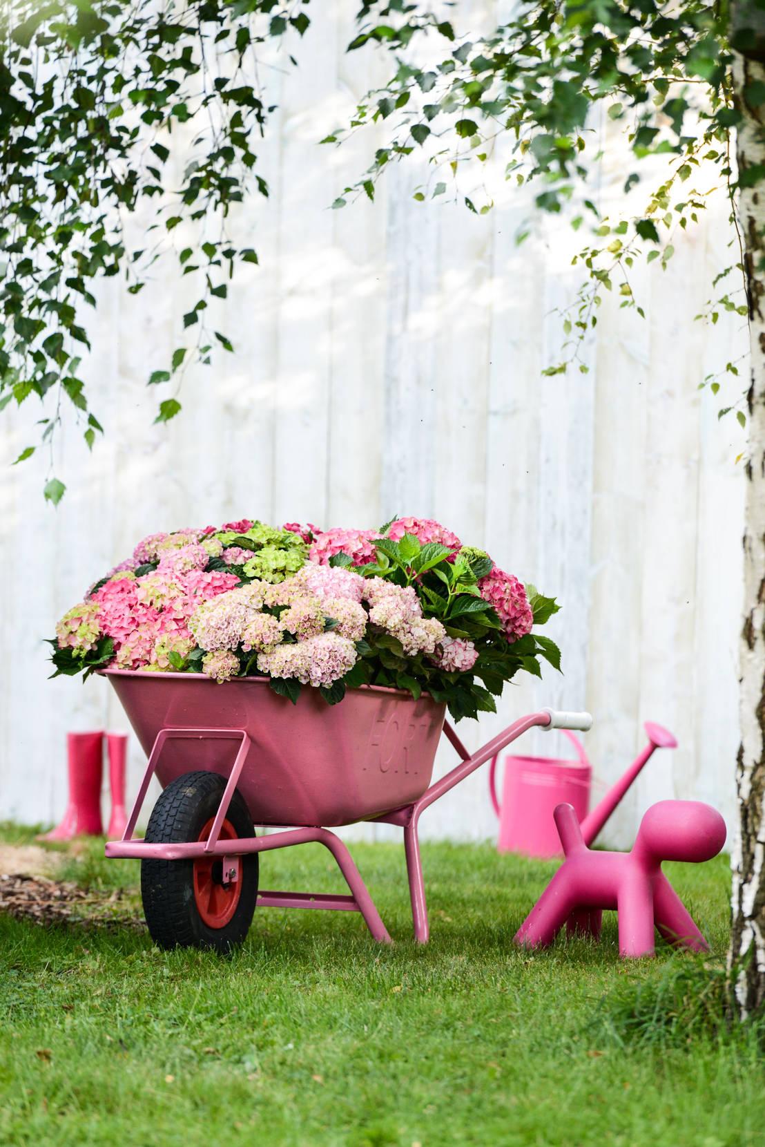 Le piante ornamentali per la tua casa for Piante secche ornamentali