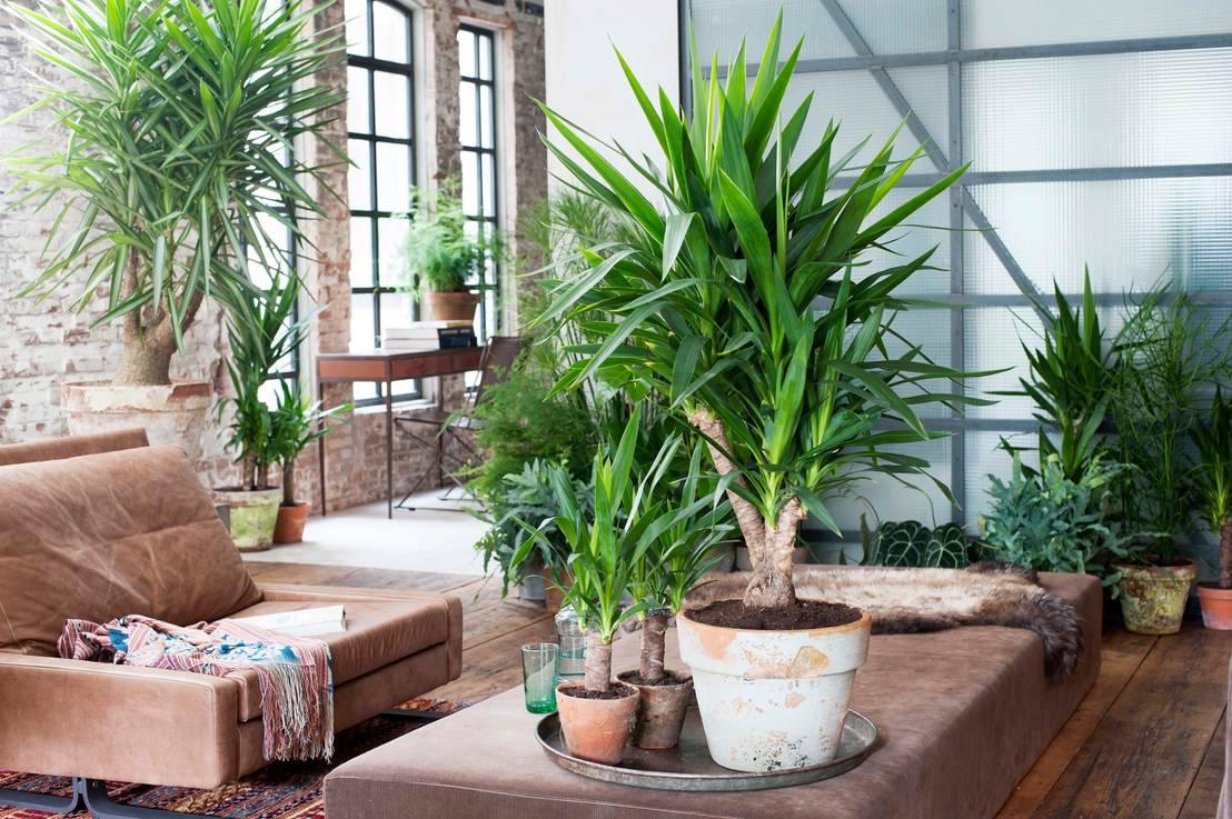 welche pflanzen eignen sich f r den innenraum. Black Bedroom Furniture Sets. Home Design Ideas