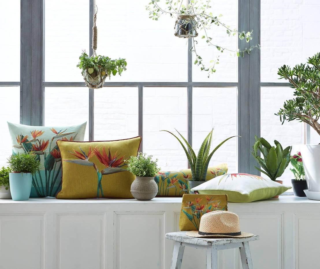 so kommen eure zimmerpflanzen gl cklich durch den winter. Black Bedroom Furniture Sets. Home Design Ideas