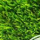 Grass Planet Avatar