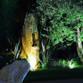 Rizzi Giardini - Garden & Exterior Design Avatar