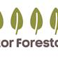Fitor Forestal SL Avatar