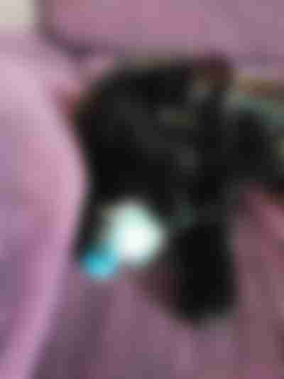 Brinquedo para gato caseiro