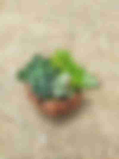 Vetplant plantenbak