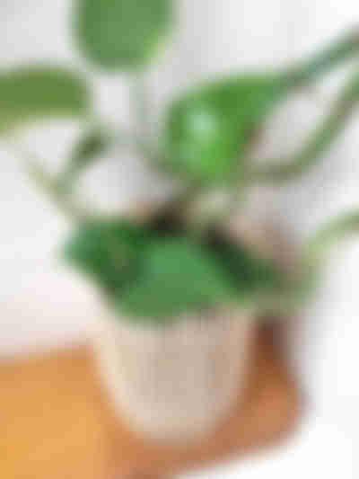 Decoratieve hoes voor de plantpot