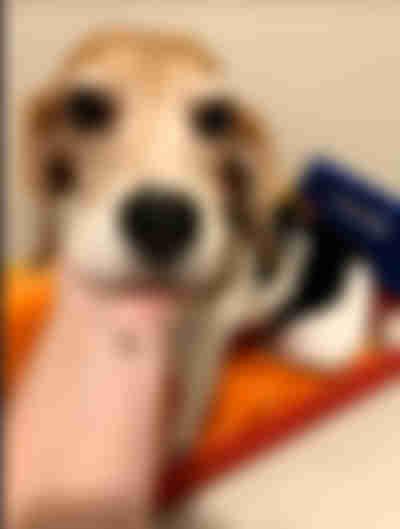 第6步:幫助狗狗搬新家